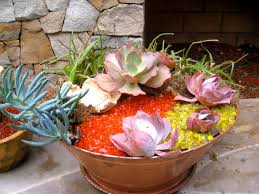 succulent container garden from cuttings and recycled materials