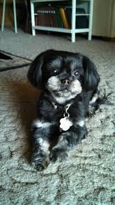 repulsif chien canapé magnifique repulsif chien canape meubles les 66 meilleures images du