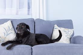 Dog Settee Sofa 9 Tips For Choosing Pet Friendly Furniture