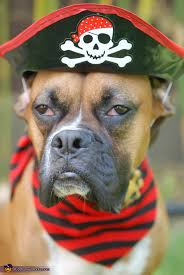 Lion Halloween Costumes Dogs Dog Dressed Pirate Costume Halloween Costume Contest