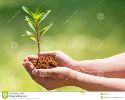 holding and planting new tree stock image image 34327769