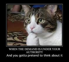 Lawyer Cat Meme - lawyer memes trying to pretend it s a tough call facebook