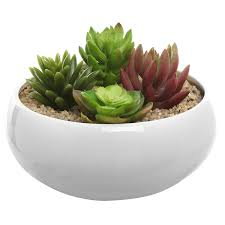 amazon com 6 5 inch round white ceramic succulent plant flower