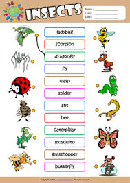 insects esl printable worksheets for kids 1