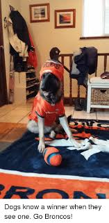 Go Broncos Meme - 国 dogs know a winner when they see one go broncos meme on me me