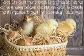 Never Count Your Chicken Before They Hatch Counting Chickens Before They Hatch Reformation Acres