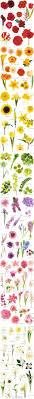 All Types Of Flowers List - flower chart each flower speaks for itself description from
