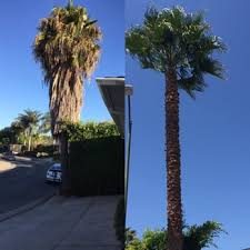 affordable tree care 21 photos 90 reviews tree services