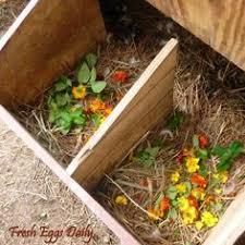 easy backyard chicken coop plans chicken nesting boxes nesting