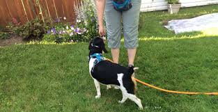 Animal Trainers Salary Advice For Becoming A Full Time Dog Trainer