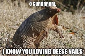 Armadillo Meme - o gurrrrrrl i know you loving deese nails paprika da armadillo