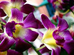fiori viola sfondo fiori viola wallpaperpack