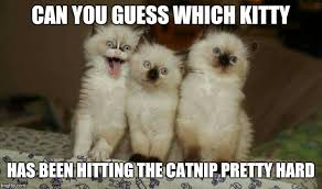 Cute Kitty Memes - 20 super duper cute and funny kitty memes sayingimages com