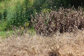herbicide wikipedia