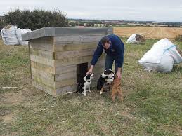 my chicken and duck coops and mini secure runs backyard chickens