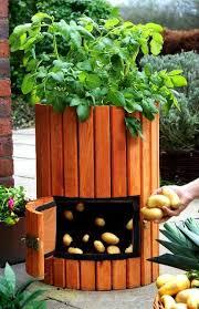 grow potatoes in a barrel youtube video potato barrel barrels