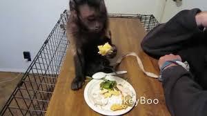 monkey thanksgiving dinner