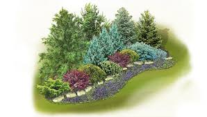evergreen screen landscape plan