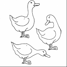 awesome five little ducks coloring pages with duck coloring page