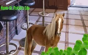 appaloosa horse st patrick u0027s day cards sloppy kiss cards