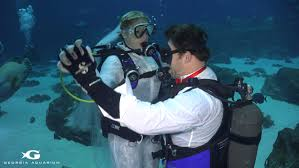 underwater wedding gets married in underwater wedding ceremony at aquarium