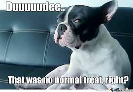 Stoned Dogs Meme - stoned dogs meme
