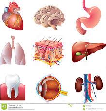 Human Anatomy Diagram Download Human Internal Body Parts Human Anatomy Chart