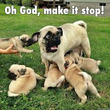 Oh Stop It Meme - oh god make it stop pug memes and comics