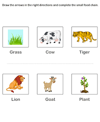 print free worksheet of food chain online learning educational