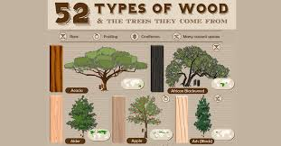 gallery of 52 types of wood and the trees they come from 1