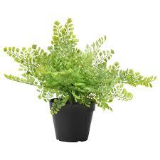artificial plants artificial plants for outdoors ikea ksa