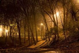 how light pollution is tricking the trees mnn nature