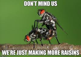 Raisins Meme - cats eat flying raisins imgflip