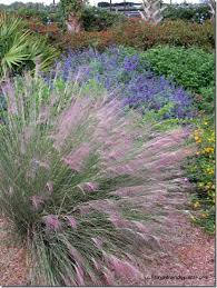 muhly grass is a florida friendly grass that is a