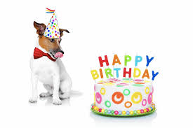 dog birthday party dog party planning throwing a birthday bash for fido and his