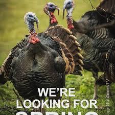 Turkey Memes - spring turkey memes memes pics 2018