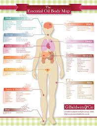 Map Diet Skinny Diva Diet Essential Oil Body Map Infographic