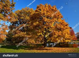 autumnal colored trees stock photo 458057293