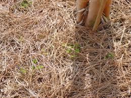 garden of aaron eating my words on pine straw