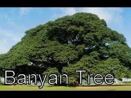 different types of trees types of plants various types of trees different types of plants