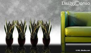 plantes d駱olluantes chambre assainir intérieur avec des plantes dépolluantes