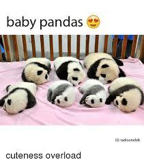 Cuteness Overload Meme - baby pandas ig radiooneleb cuteness overload baby it s cold