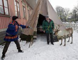 the last reindeer of norway pacific standard