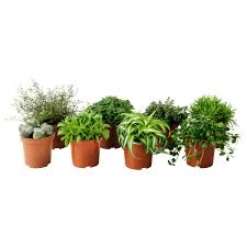 small potted plants himalayamix potted plant ikea