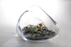 living terrariums u2014 work u2014 paula hayes