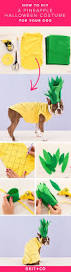 the most popular dog costumes popsugar pets best 25 halloween costumes for dogs ideas only on pinterest pet