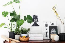 plants indoors 8 super cute indoor plants to buy now brisbane the urban list