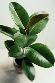 plant for bedroom best bedroom plants low light indoor bedroom inspired air