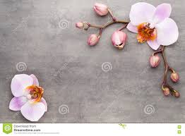 spa orchid theme objects on grey background stock photo image