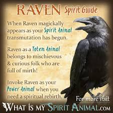 Meaning Of Comfortable by Raven Symbolism U0026 Meaning Spirit Totem U0026 Power Animal